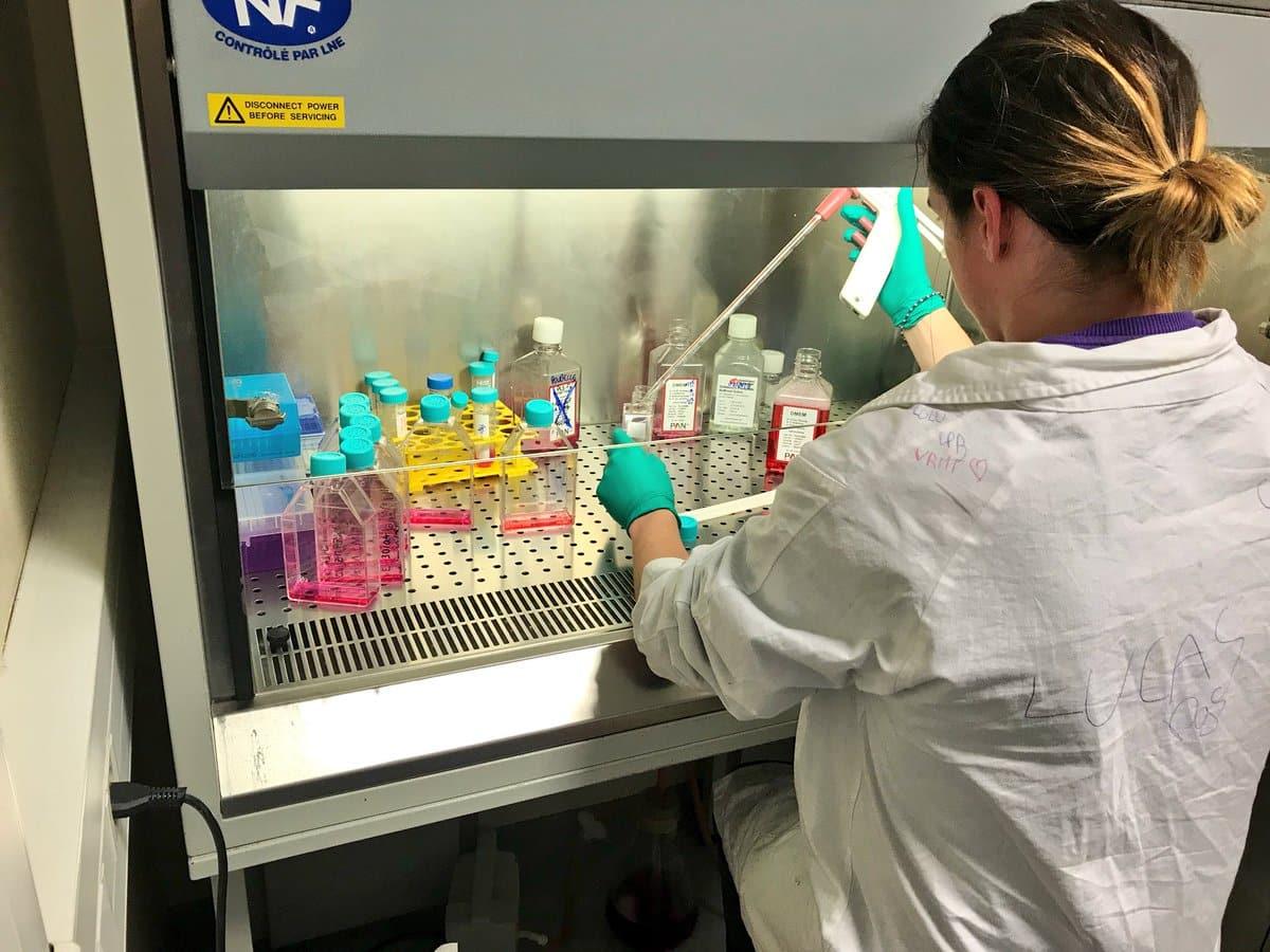 La réalisation des manipulations en laboratoires
