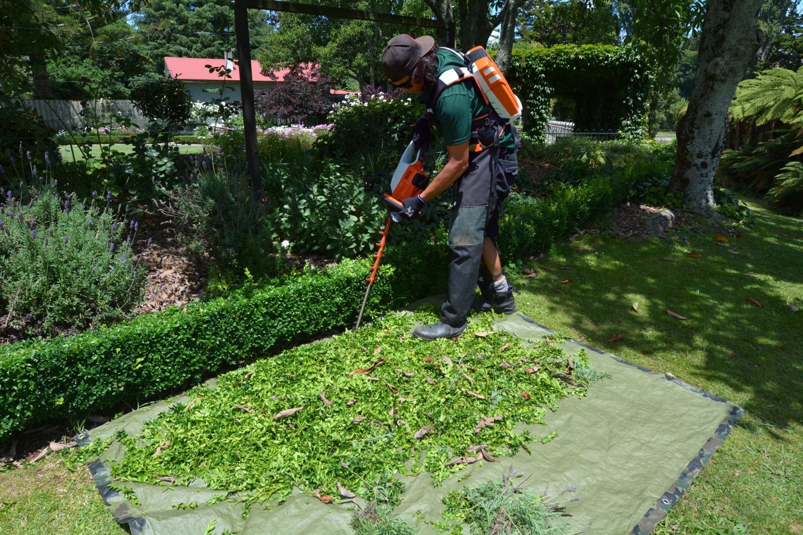 Equipement pour tailler les arbustes